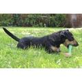 BecoBone Dog Toy - Green 13