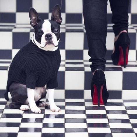 Kora Cable Knit Cashmere Dog Sweater - Black 2