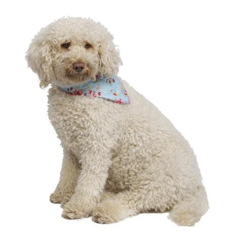 Blue Vintage Primrose Dog Bandana 3