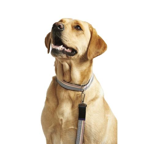 Beige Barkberry Dog Collar 2