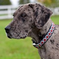 All Style No Stink Waterproof Dog Collar  2