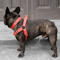 Red Cotton Webbing Dog Collar 5