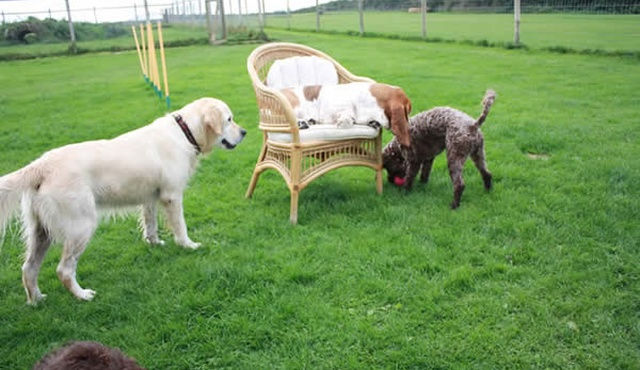 The Canine Country Club 2