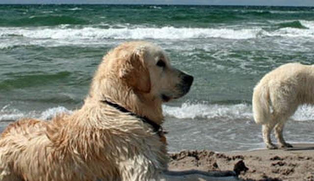 Doggy Chums - Archway