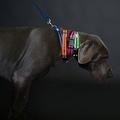 Pink Dog Collar 3