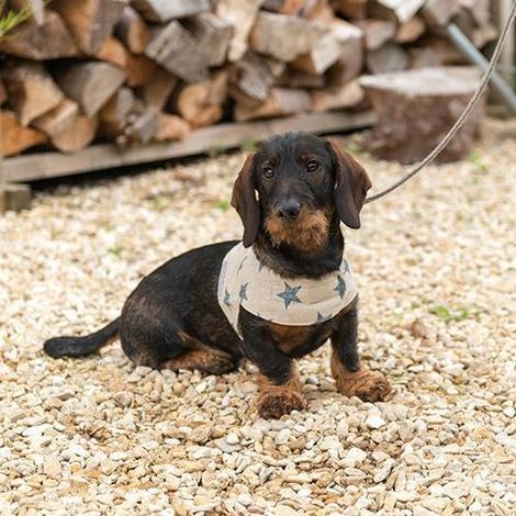 Navy Star Linen Soft Dog Harness 4
