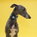 Geo Blue Hound Collar 5