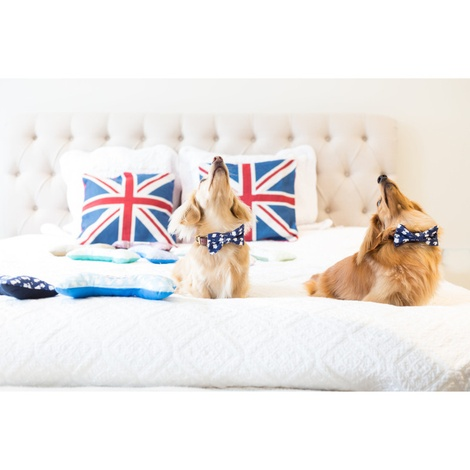 Teddy Maximus Navy Dog Bow Tie 4