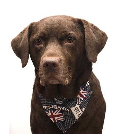 Union Jack Indiana Dog Bandana