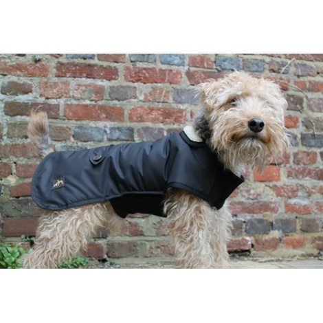Bold in Black Dog Coat 4