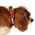 Bold Reflective Dog Collar – Red 5