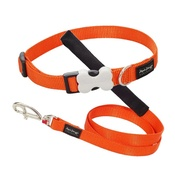 Orange Collar & Lead
