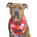 Bloody Skulls Dog Bandana