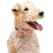 Mutts & Hounds - Red Ticking stripe Bow Tie