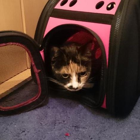 Rosa Pet Carrier 3