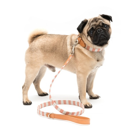 Camello Striped Dog Lead 2