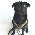 Dog Lead - Beaufort 3
