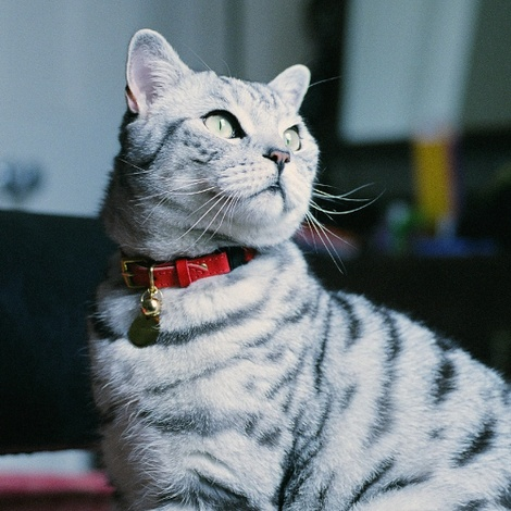 Leather Red Cat Collar 3
