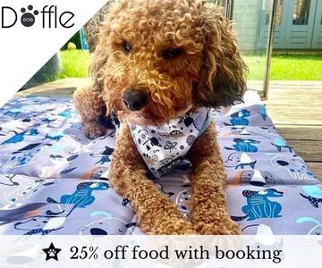 Doffle Dog