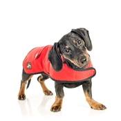 Country and Twee - Red Waxed Cotton Dachshund Coat