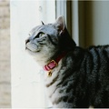 Leather Pink Cat Collar 3