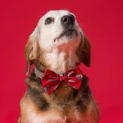 House of Paws - Santa Dog Bow Tie