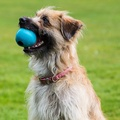 BecoBall Dog Toy - Blue 10