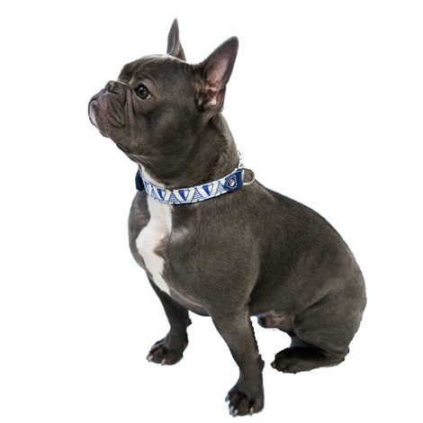 Blue Geo Dog Collar