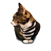 Zukie Style - Referee Dog & Cat Bandana