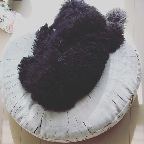 Birch Annual Ring Pet Bed 2