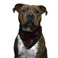 Red Skulls Dog Bandana 3