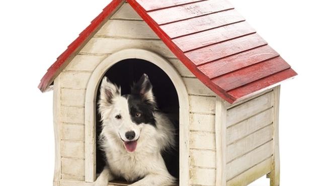 Nina's Nannies For Pets - Hampshire