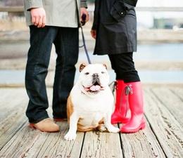 Inspiration 2: Exclusive to PetsPyjamas
