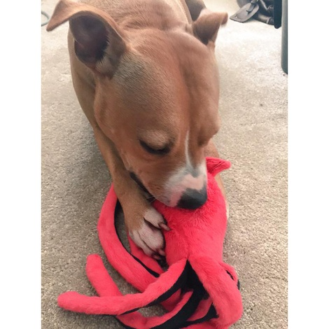 Giant Squid Plush Squeaky Dog Toy 3