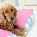 Orthopaedic Dog Bed - Pink & Blue 2