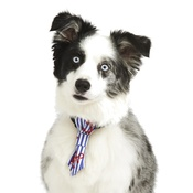 Pet Pooch Boutique - Anchors Away Dog Tie