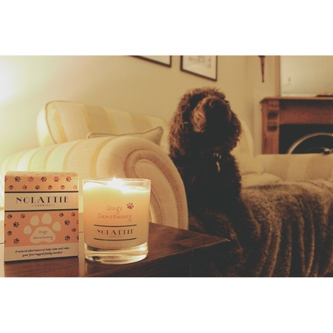 Dogs Sanctuary Calming Candle 4