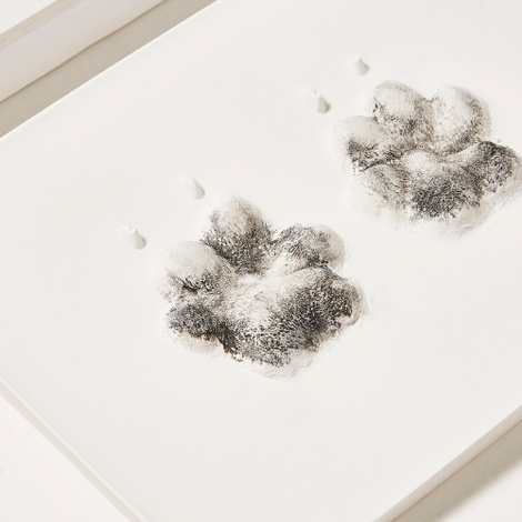 Framed Personalised Paw Mould 5