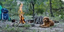 How to go camping with your dog - our top tips