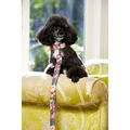 Sapphire Rose Dog Collar 3