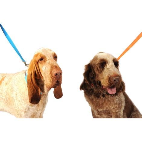 Bold Dog Collar – Orange 4