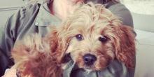 The puppy diaries - Momo & Lucia Ferrari