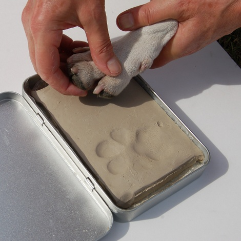 Framed Personalised Paw Mould 3