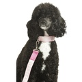 Bella Dog Lead 2