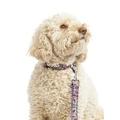 Kaliko Dog Collar 2