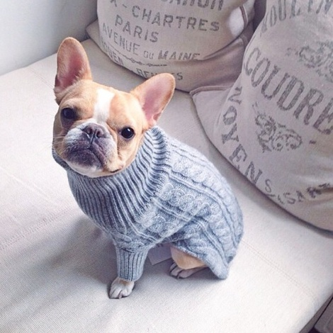 Kora Cable Knit Cashmere Dog Sweater - Dove 2