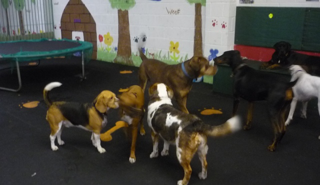Lovely Bones Doggy Day Care 3