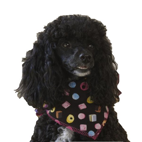 Sweets Galore Dog Bandana
