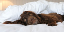 The doggie holiday packing list by Spaniel Life