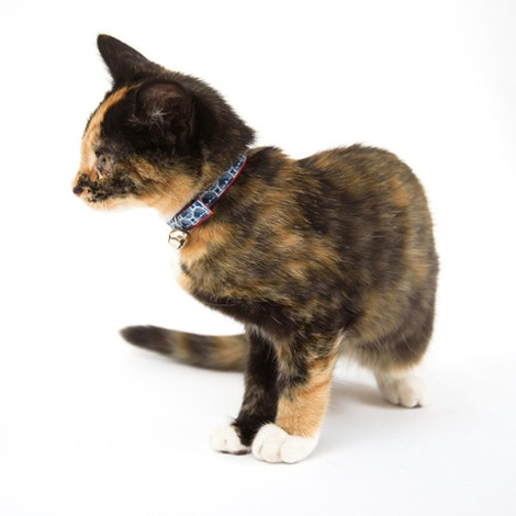Shweshswe Navy Circles Cat Collar 3